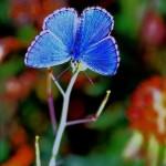 Бабочка или цветок