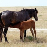 filly and foal