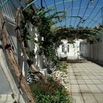 караим-кенассы- виноградный двор ожидания молитвы