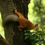 squirrel-nikita-garden-
