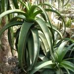 Nikita. Cactus greenhouse
