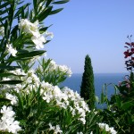 Nikita-garden