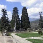 Секвойядендроны или мамонтовые деревья.