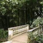 Nikita-Botanical garden. Bamboo