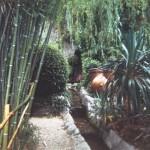 Chekhov's garden-bamboo