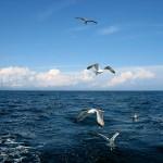Что называют Мировым океаном?