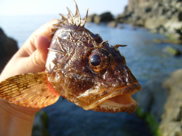 -Рыбалка в Чёрном море