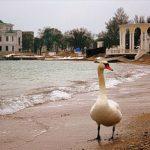 Почему исчезают пляжи Евпатории?