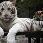 Принуждение к миру и порядку в парке «Тайган»