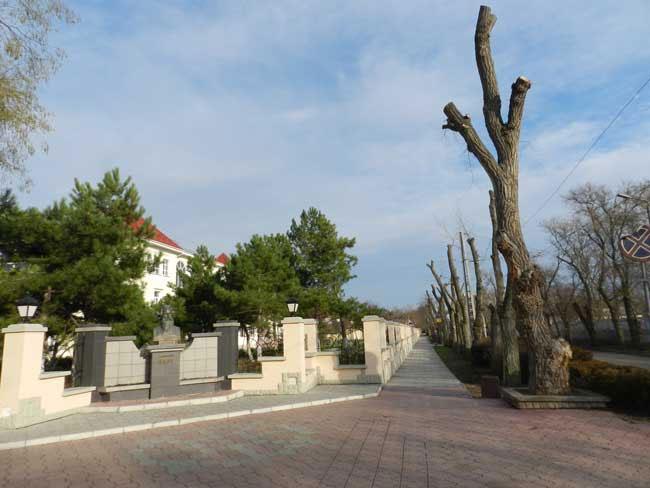 Евпатория, обрезка - омоложение деревьев