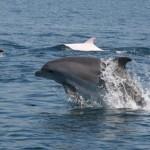 Дельфины у берегов Евпатории.