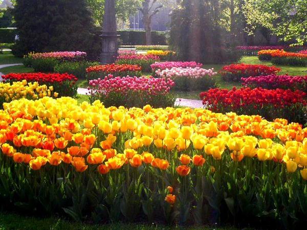 тюльпанов парад
