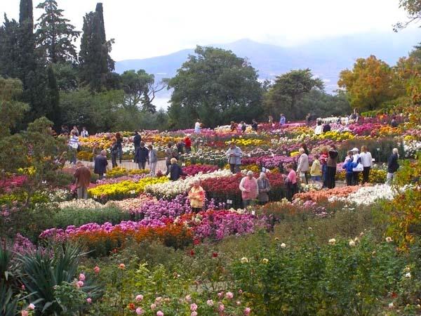 бал хризантем в Никитском саду