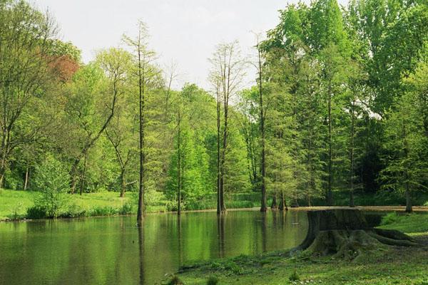 Dortmund_rombergparkFredenbaum parki