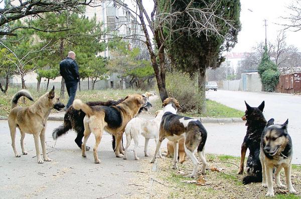 собаки в крыму