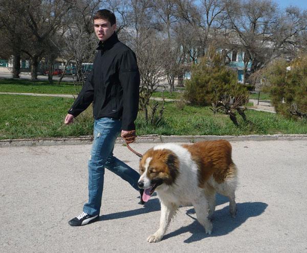 Собака должна гулять только с хозяином