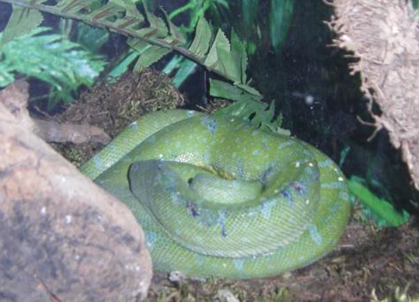 змеи8