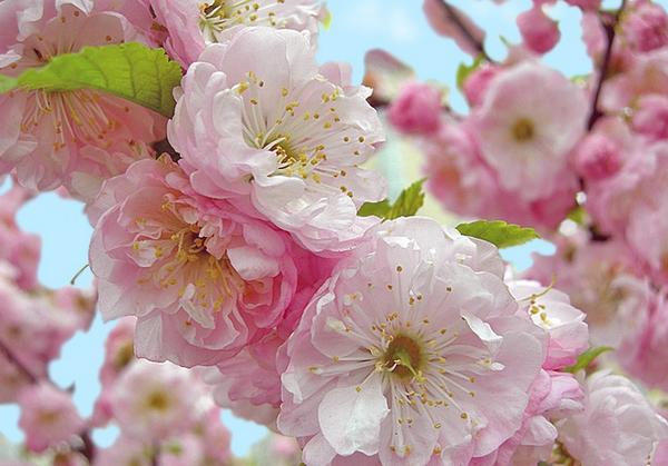5-весна