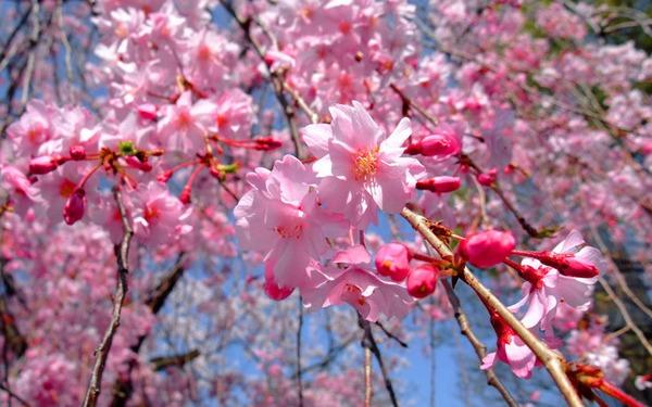 6-весна