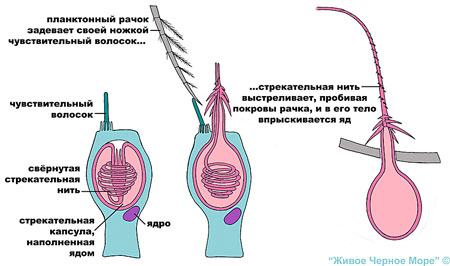 kletki1