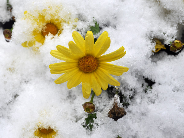 Snowsun