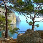 300 уникальных деревьев Крыма