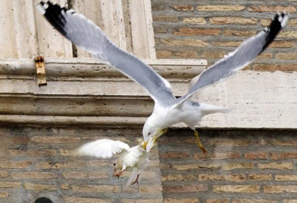 -чайка атакует