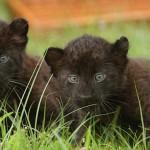 Экзотические звери появятся в крымских зоопарках.