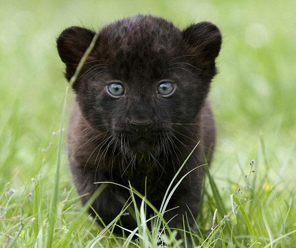 Черная черная сказка про черных черных зверей