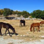 Будёновская порода лошадей в Крыму