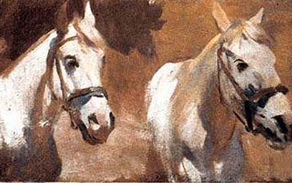 Головы белых лошадей.