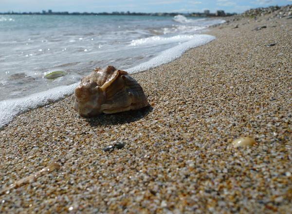 прекрасные песчаные пляжи