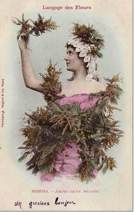 mimosa.jМимоза- чувствительность, стыдливость, застенчивость