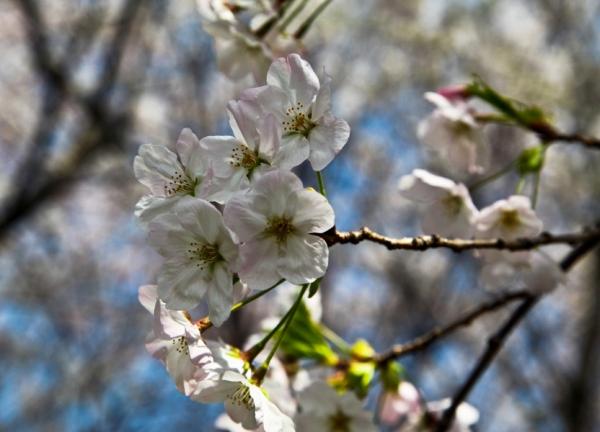 весна4