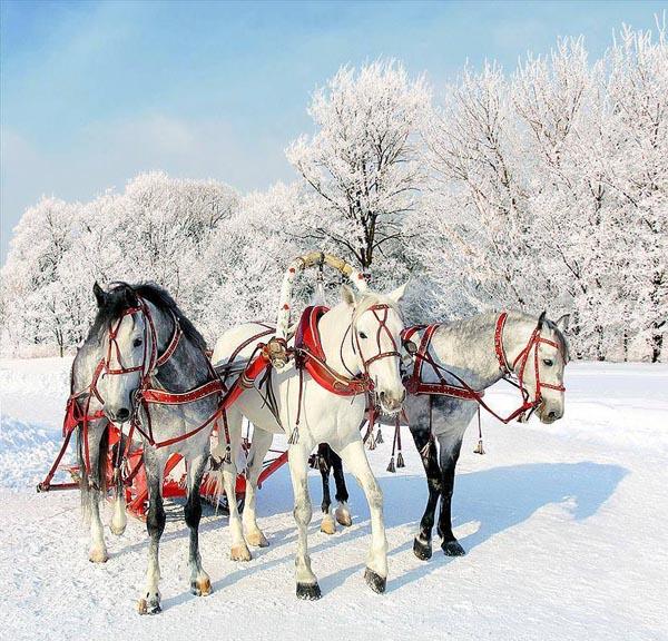 3-лошади