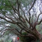 Природа — храм, а не мастерская