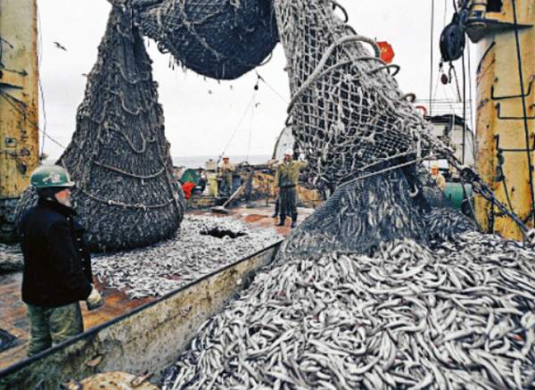 рыба-сетью