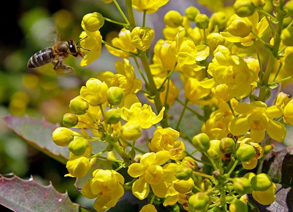 пчела-весна