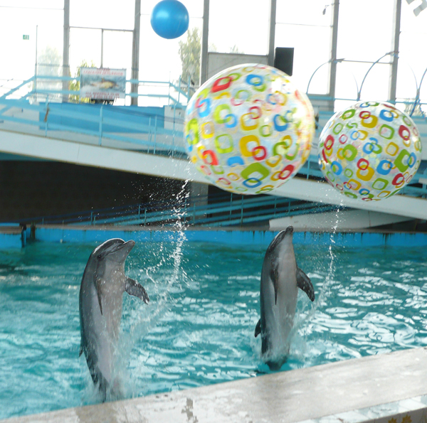 дельфины играют