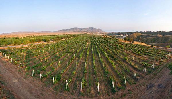 вино-Солнечная долина