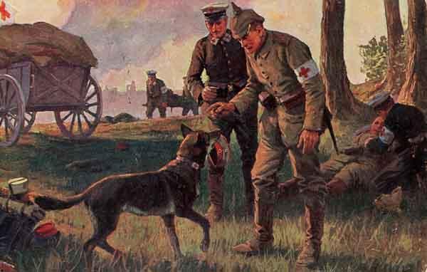 санитарная собака-1914