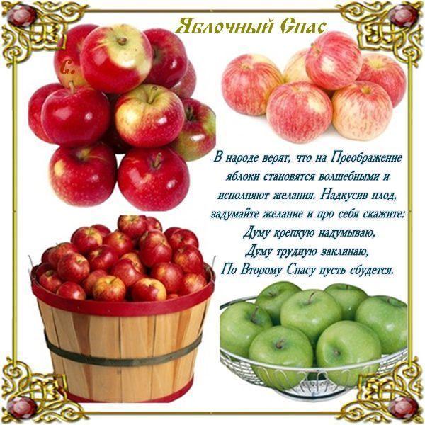 19-спас ябл