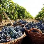 Виноделы «Массандры» приглашены на винный фестиваль в Италию