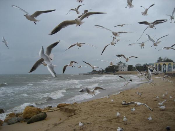 осень-морере-чайки