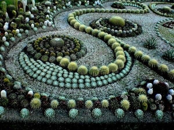 кактус-сад из суккулентов
