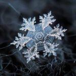 Портрет снежинки