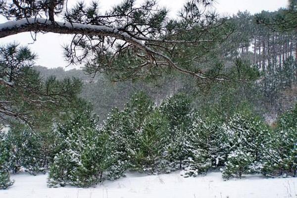 зима-айпетри-