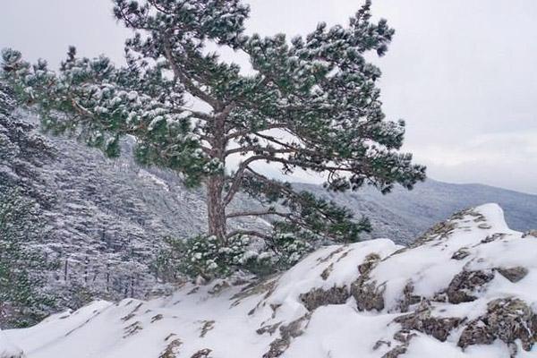 зима-ай-пет