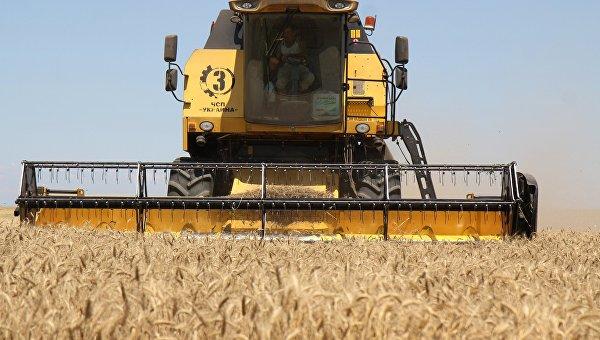 пшеница-уборка