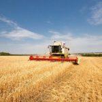 Рекордный урожай зерновых в Крыму